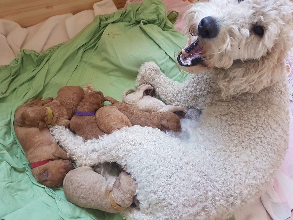 3 Tage nach der Geburt der Puppys ist noch Ruhe in der Wurfkiste