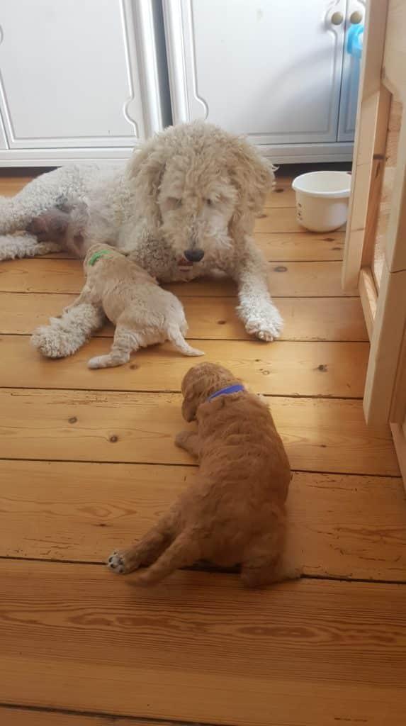 Nach 18 Tagen verließen die ersten mutigen Welpen das Nest, hier Sunny und Ronja