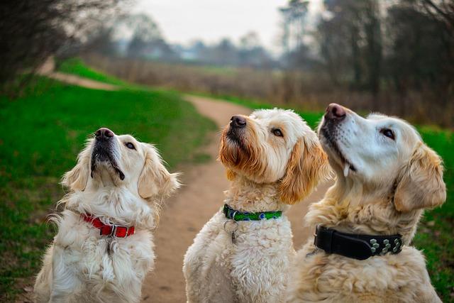 Drei Hunde in der Schule
