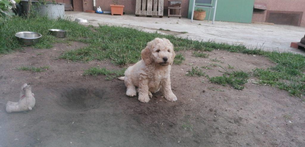 Otto kurz vor seinem Auszug, mit ungefähr 7 Wochen